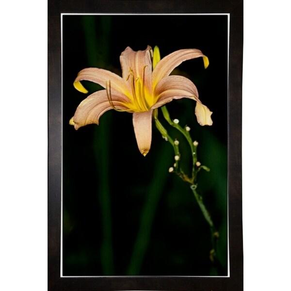"Morning Color-HARFLO59781 Print 25""x16"" by Harold Silverman - Flowers"