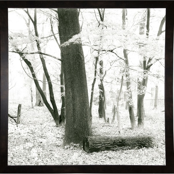 """Deep Woods Pl. 3-HARTRE61314 Print 20""""x20"""" by Harold Silverman - Trees & Old Fences"""