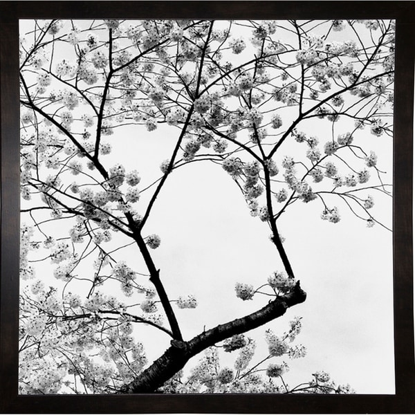 "Cherry Blossom Time-HARTRE57459 Print 12""x12"" by Harold Silverman - Trees & Old Fences"