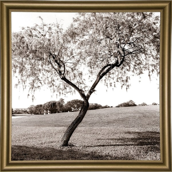 """Victory Shape Tree-HARTRE68882 Print 20""""x20"""" by Harold Silverman - Trees & Old Fences"""