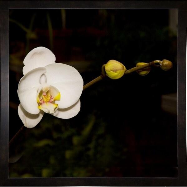 "Warm White Orchid-HARFLO69384 Print 18""x18"" by Harold Silverman - Flowers"