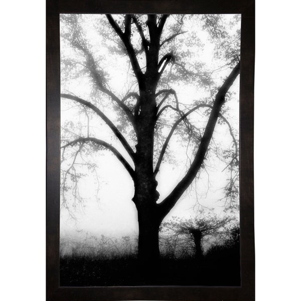 "Textures In Shadows-HARTRE61321 Print 25""x16.75"" by Harold Silverman - Trees & Old Fences"