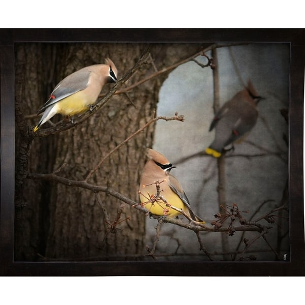 "Winter Visitors Cedar Waxwings-JAIJOH139959 Print 10.75""x13.25"" by Jai Johnson"
