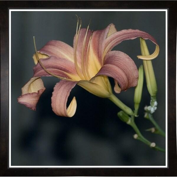 """Fine Art Lily-HARFLO90000 Print 18""""x18"""" by Harold Silverman - Flowers"""