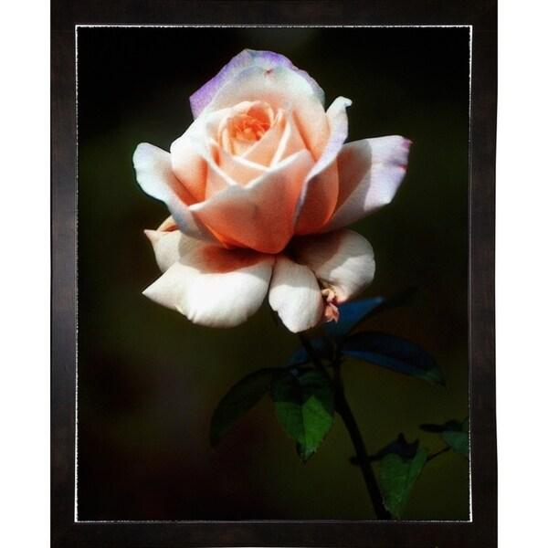 "Rose Delight #2-HARFLO50353 Print 14""x11.25"" by Harold Silverman - Flowers"