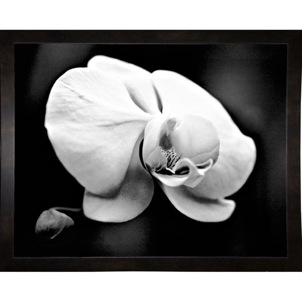"""White Orchid-HARFLO59565 Print 11""""x14"""" by Harold Silverman - Flowers"""