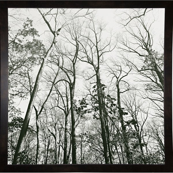 """Trees High Woods-HARTRE61311 Print 20""""x20"""" by Harold Silverman - Trees & Old Fences"""