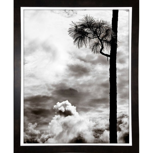 """Palms And Sky-HARTRE84836 Print 20.25""""x16.25"""" by Harold Silverman - Trees & Old Fences"""