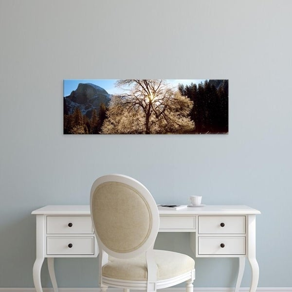 Easy Art Prints Panoramic Images's 'Low angle view of a snow covered oak tree, Yosemite National Park, California' Canvas Art
