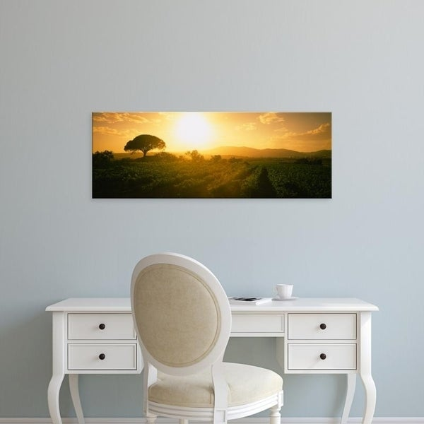 Easy Art Prints Panoramic Images's 'Sunrise over a vineyard, Provence-Alpes-Cote D'azur, France' Premium Canvas Art