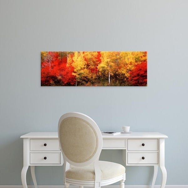 Easy Art Prints Panoramic Images's 'Aspen and Black Hawthorn trees in a forest, Grand Teton National Park, Wyoming' Canvas Art