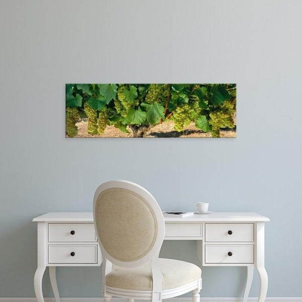 Easy Art Prints Panoramic Images's 'Chardonnay Grapes On The Vine, Napa California, USA' Premium Canvas Art