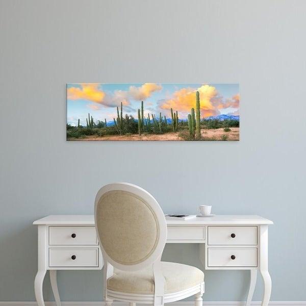 Easy Art Prints Panoramic Images's 'Cardon cactus plants in a forest, Loreto, Baja California Sur, Mexico' Premium Canvas Art