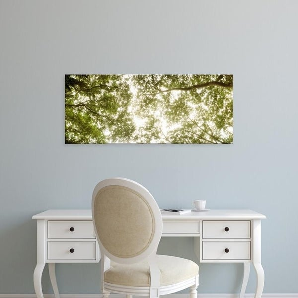 Easy Art Prints Panoramic Images's 'Low angle view of sunlight shining through the trees in summer' Premium Canvas Art