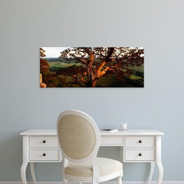 Easy Art Prints Panoramic Images's 'Close-up of a cedar tree, Wisconsin, USA' Premium Canvas Art