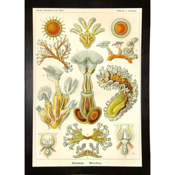 "Bryozoa - Scheiben-Strahlinge - Heliodiscus-PRIPUB130818 Print 12""x8.25"" by Print Collection"