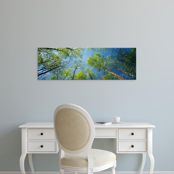 Easy Art Prints Panoramic Images's 'View of yellow poplar trees, Great Smoky Mountains National Park, Tennessee' Canvas Art