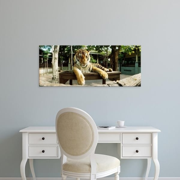 Easy Art Prints Panoramic Images's 'Tiger (Panthera tigris) in a tiger reserve, Tiger Kingdom, Chiang Mai, Thailand' Canvas Art
