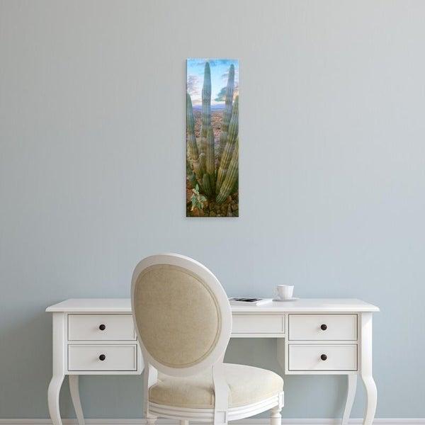 Easy Art Prints Panoramic Images's 'Pitaya cactus plant in desert, Mulege, Baja California Sur, Mexico' Premium Canvas Art