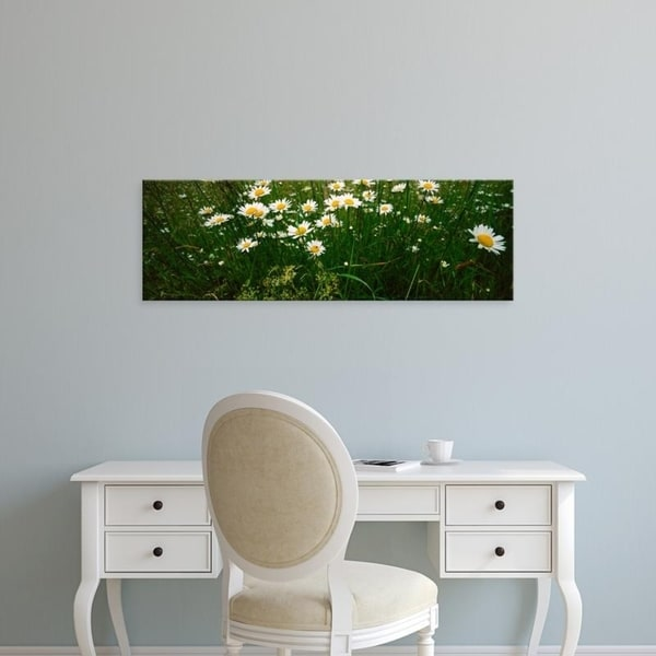 Easy Art Prints Panoramic Images's 'View of Daisy flowers in meadow, Rinzenberg, Rhineland-Palatinate, Germany' Canvas Art