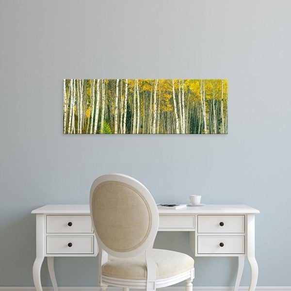 Easy Art Prints Panoramic Images's 'Aspen trees in a forest, Grand Teton National Park, Teton County, Wyoming' Canvas Art