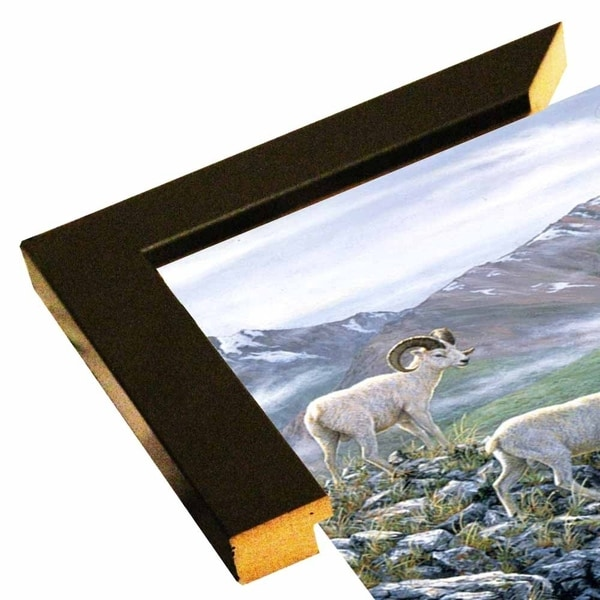 "Dall Sheep At Denali-JEFTIF54220 Print 23.25""x26.75"" by Jeff Tift"