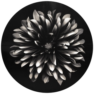 """Petals"" Circular Canvas Printed on 2"" Wood Stretcher Wall Art"