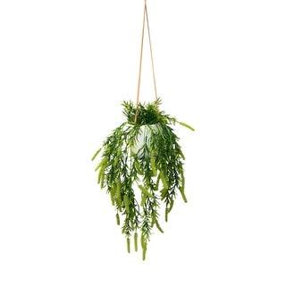 Modern hanging greenery