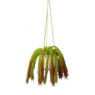 Modern succulent hanger