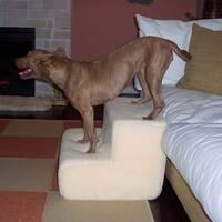 PetStairz Tan Foam Big Dog 2-step Pet Stairs