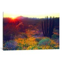 iCanvas ''Sunset, Organ Pipe NM, USA'' by Christopher Talbot Frank