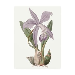 Edwards 'Lavender Beauties Iv' Canvas Art