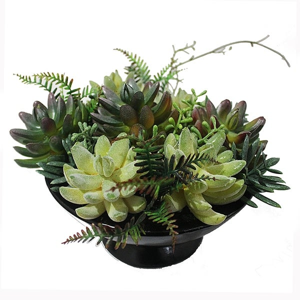 Essential Decor & Beyond Succulent Plant in Ceramic Vase EN112075 - Green - 7 x 7.5 x 7.5