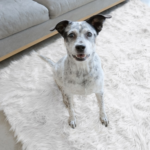 Ruggable Washable Indoor Outdoor Stain Resistant Waterproof Pet Area Rug Luxury White 5