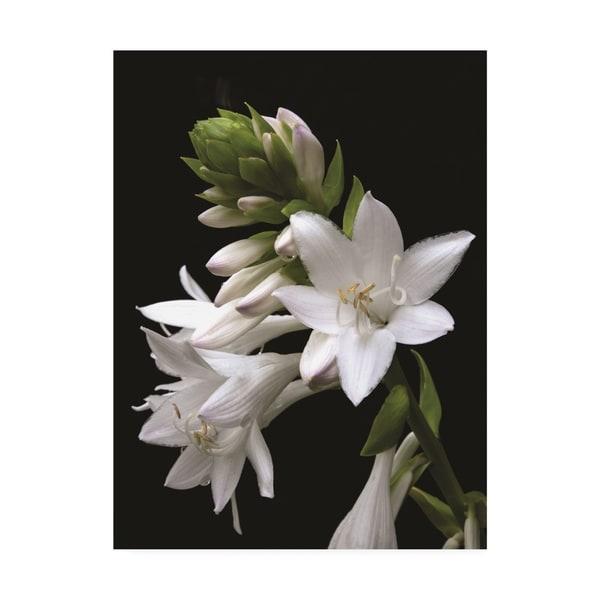 Shop Kurt Shaffer White Hosta Flower Canvas Art Free Shipping