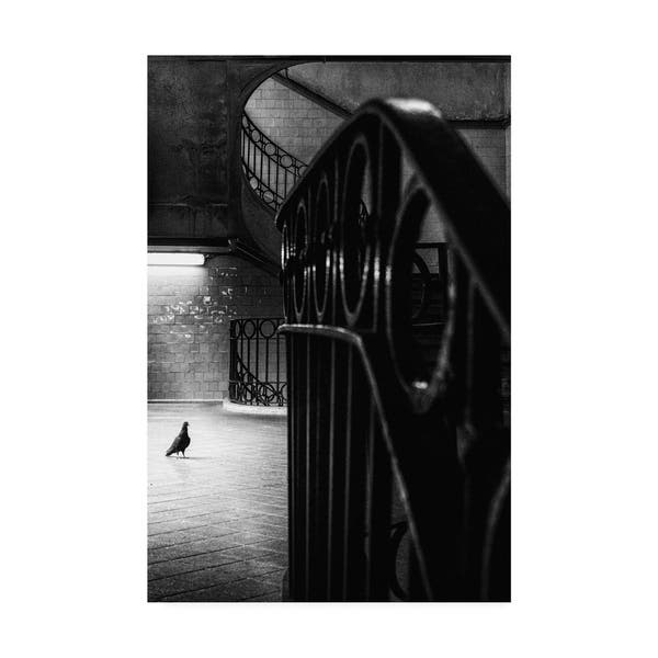 80b5cc38ba Shop Laura Mexia 'Big Bird In A Small Cage' Canvas Art - Free ...