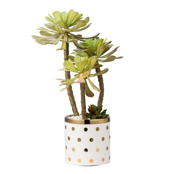 """Polka Dot Pot With Potted Succulet Stemx3 In Plated Pot, 9x8x15""""H"""