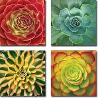 Fuzzy Red, Glowing, Striped & Fiery Succulent by Jan Bell 4-piece Gallery Wrapped Canvas Giclee Art Set (Ready to Hang)