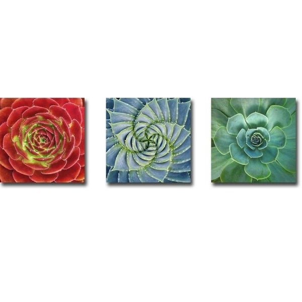 Fuzzy Red, Spiral, & Glowing Succulent by Jan Bell 3-piece Gallery Wrapped Canvas Giclee Art Set (Ready to Hang)