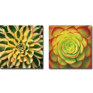 Striped & Fiery Succulent by Jan Bell 2-piece Gallery Wrapped Canvas Giclee Art Set (Ready to Hang)