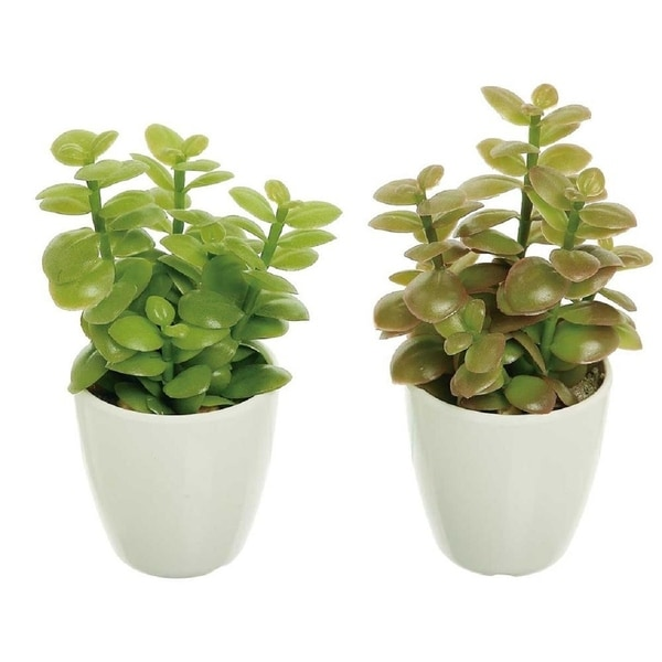 Faux succulent jade plant