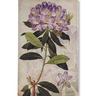 Mercana Rhododendron II (MC) (34 X 54) Made to Order Canvas Art