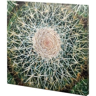 Mercana Desert Plants III (41 x 41) Made to Order Canvas Art