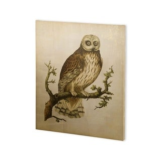 Mercana Antique Nozeman Owls II (30 x 37) Made to Order Canvas Art