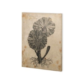 Mercana Thornton Succulents II (30 x 40) Made to Order Canvas Art