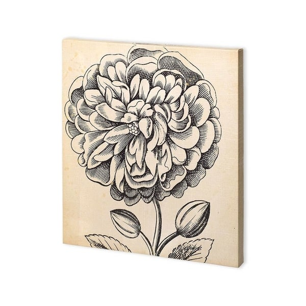 Mercana Graphic Floral V (30 x 30) Made to Order Canvas Art