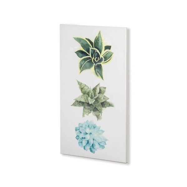Mercana Custom Row of Succulents I (30 x 53) Made to Order Canvas Art