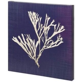 Mercana Seaweed on Navy II (44 x 44) Made to Order Canvas Art