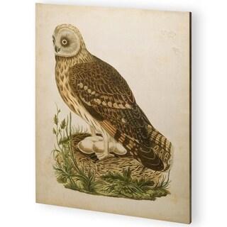 Mercana Antique Nozeman Owls I (44 x 55) Made to Order Canvas Art