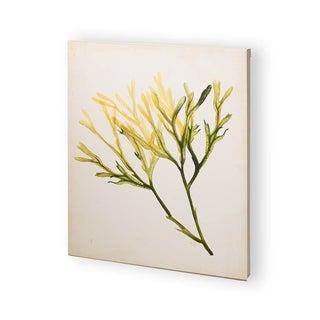Mercana Watercolor Sea Grass V (30 x 37) Made to Order Canvas Art